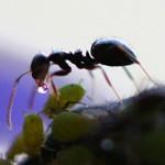 hormigas 150x150 Bichos